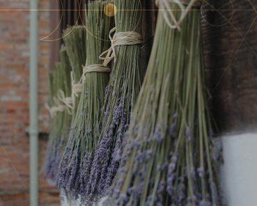 Mysterious Floristry at Barley Hall